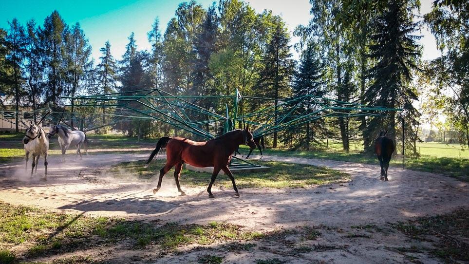 hodowla koni arabskich w janowie